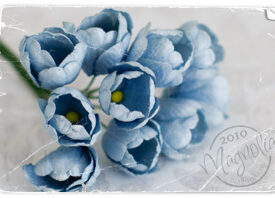 magnolia_0278