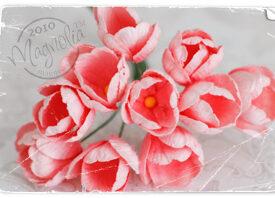 magnolia_0281