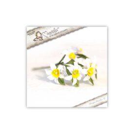 AY14 Narcissus